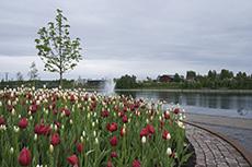 Bryggarbacken, Skellefteå