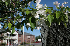 Stadshuset, Norsjö